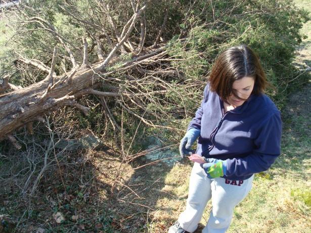 2010-3-21 Pine tree take down 005