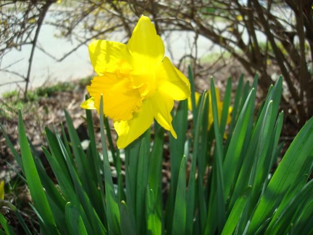 2010-4-4 Easter 016